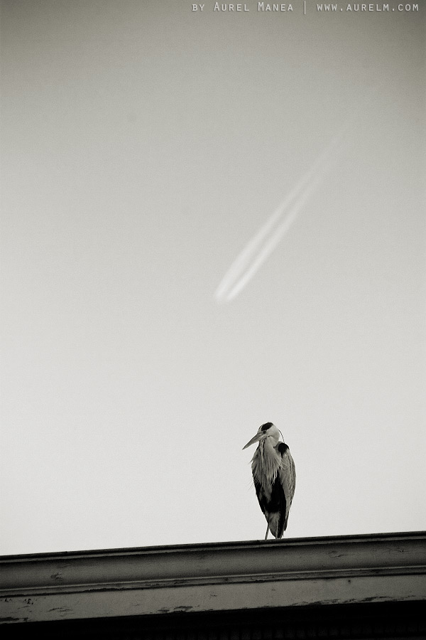 Amsterdam-bird-01