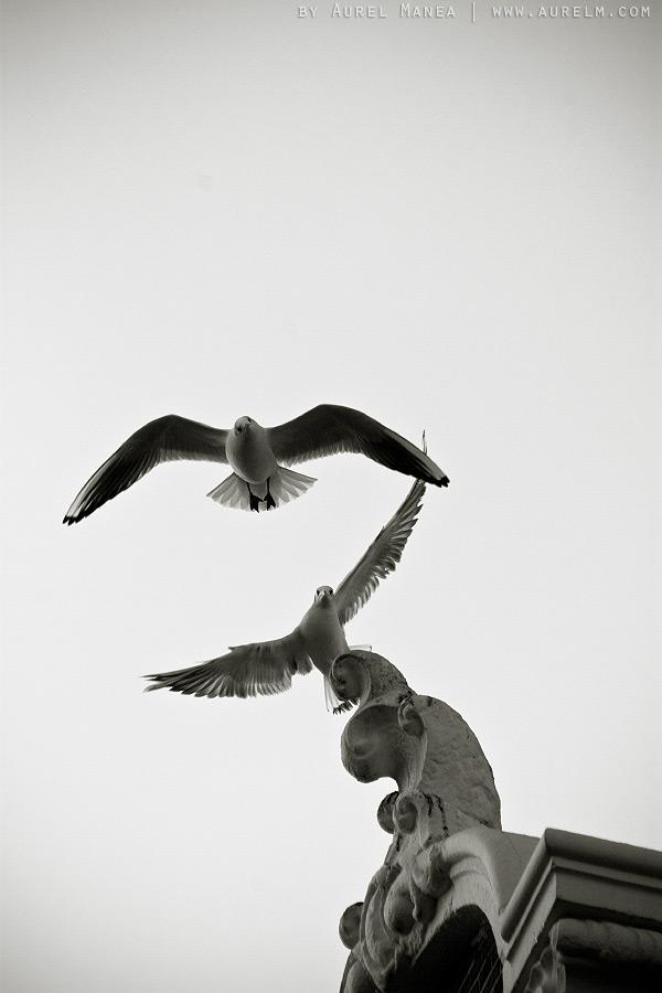 Amsterdam-birds-01