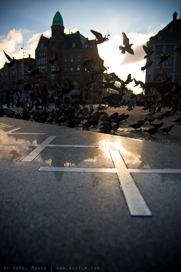 Amsterdam-pigeons-01