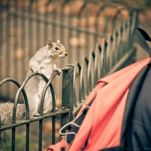 Video urban UK park London cute