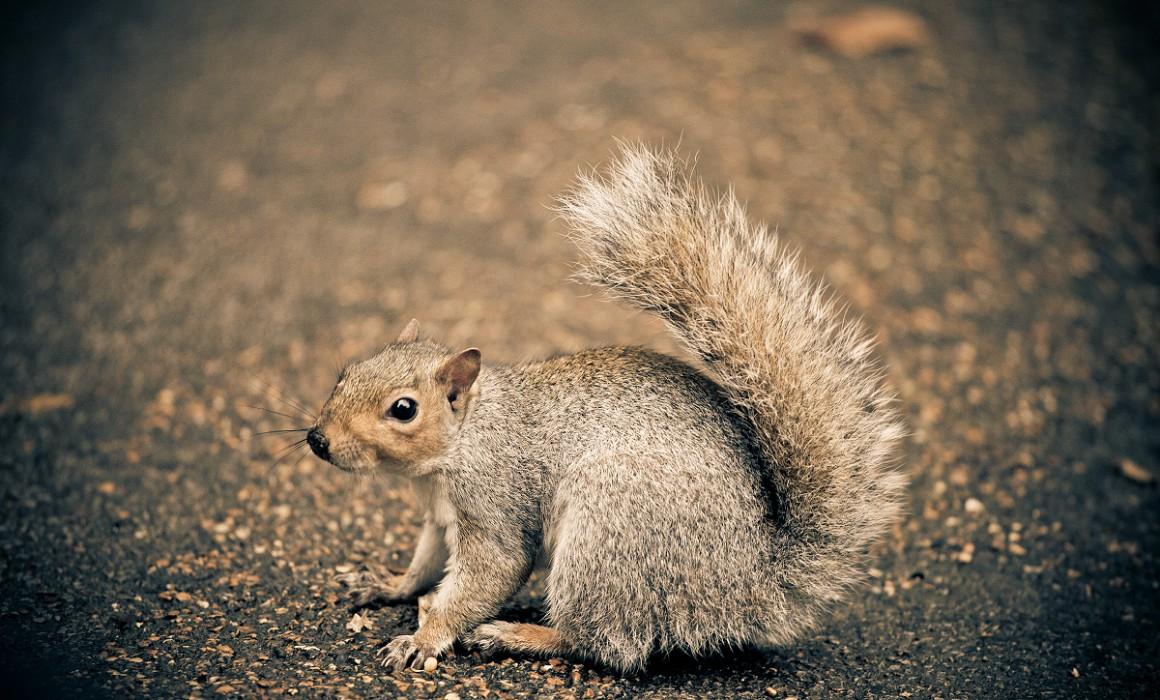 Cute squirrels in London