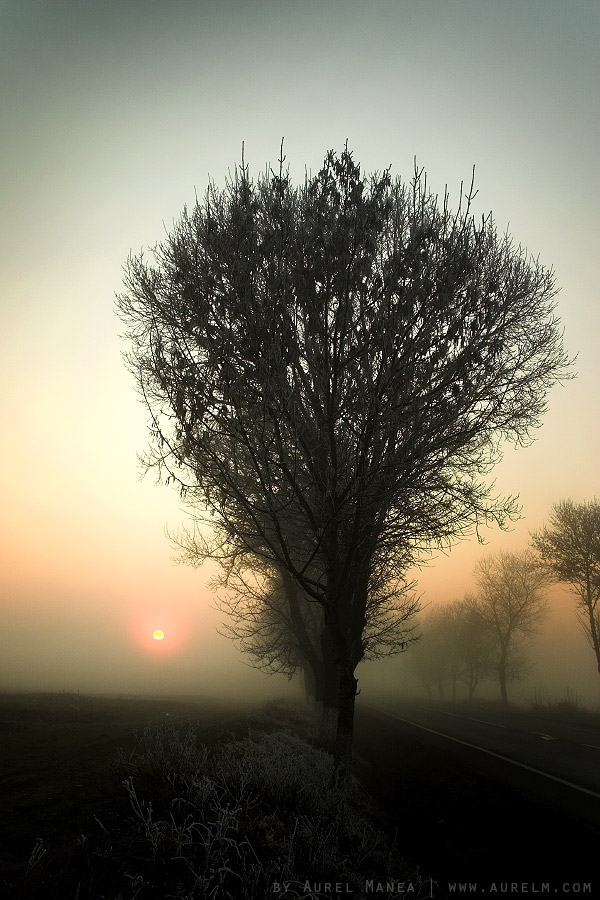 Foggy-sunset-in-Olt-Romania-03