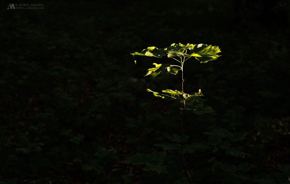 Plitvice-a-plant-in-light