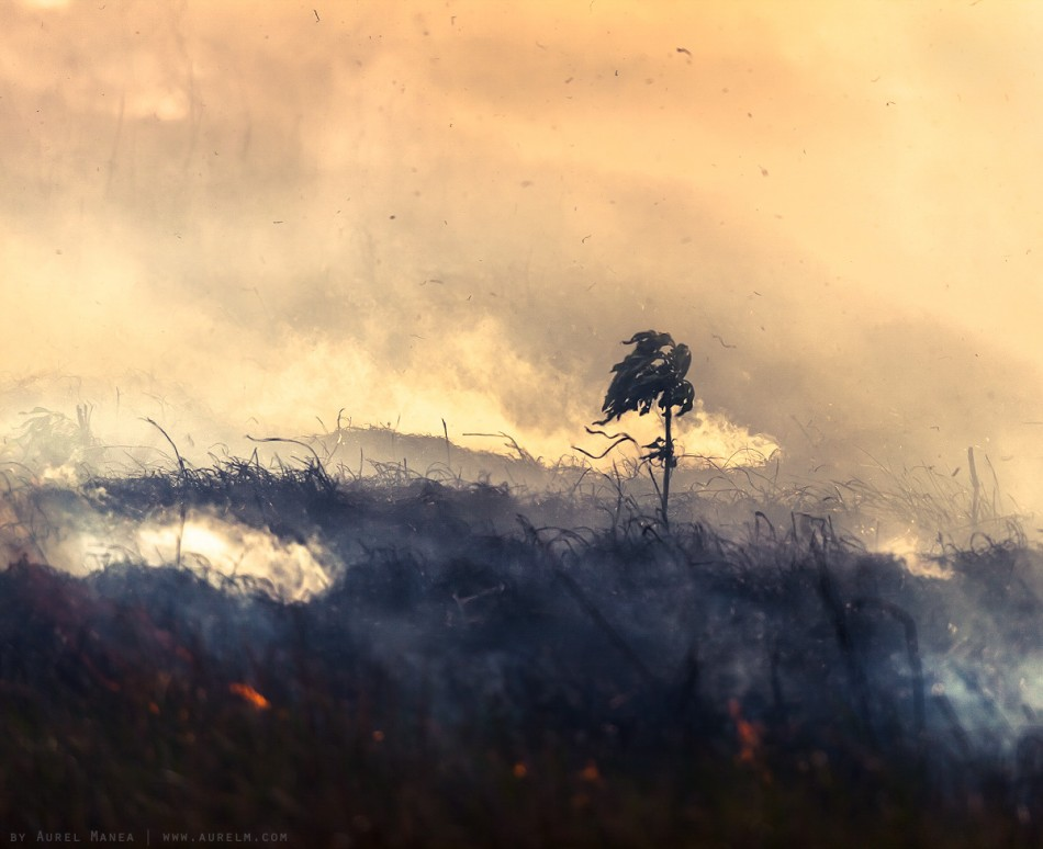 plants fire fields bushfire Bulgaria 