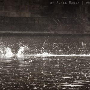prague-duck-01