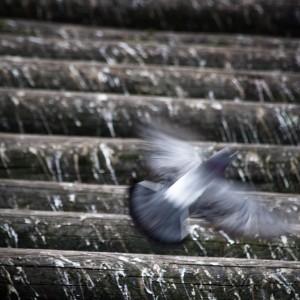 prague-pigeon-01
