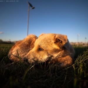 sad-dog-01