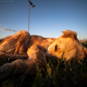 sad-dog-03