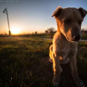 sad-dog-05