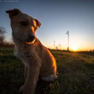 sad-dog-07