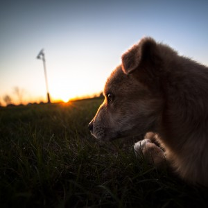 sad-dog-08