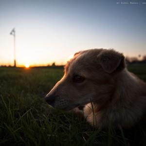 sad-dog-09